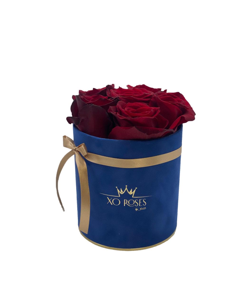 Semišový Royal Blue box – Mini